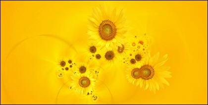 Sunflower ภาพพื้นหลังของวัสดุ-7
