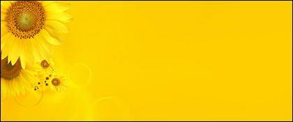 Sunflower ภาพพื้นหลังของวัสดุ-9