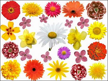 รูปภาพดอกไม้สีสันวัสดุ