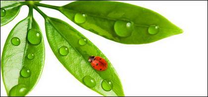 Insectos y plantas flotantes imagen material-10