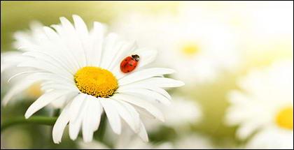 Insectos y plantas flotantes imagen material-9