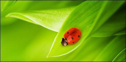 Insectos y plantas flotantes imagen material-7