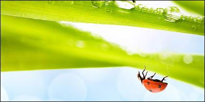 Insectos y plantas flotantes imagen material-6