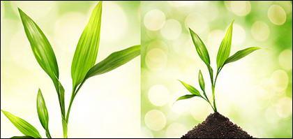 พืชและแมลงลอยภาพวัสดุ-5