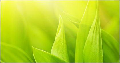 พืชและแมลงลอยภาพวัสดุ-4