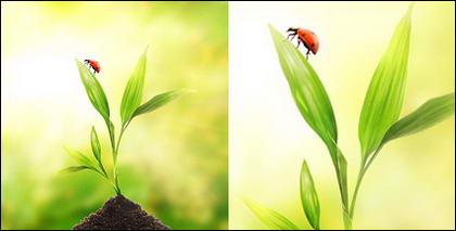 Flutuante plantas e insetos picture material-2