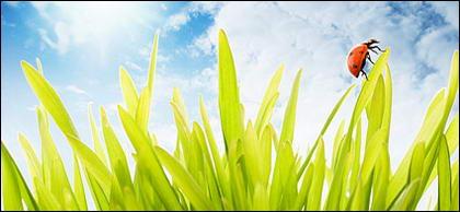 Flutuante plantas e insetos picture material-1