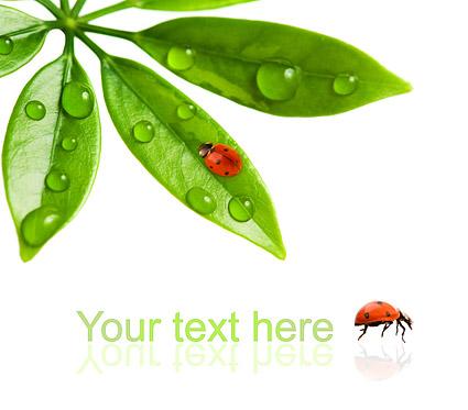 Mengambang tanaman dan serangga gambar bahan-10