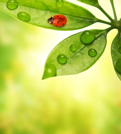 พืชและแมลงลอยภาพวัสดุ-8