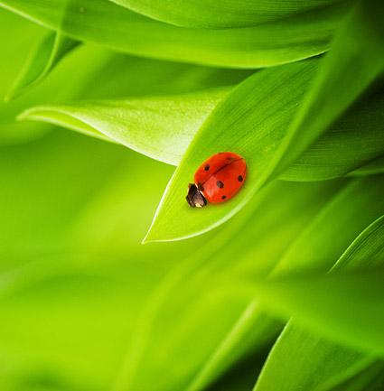 Matériel-7 d'image flottante des plantes et des insectes