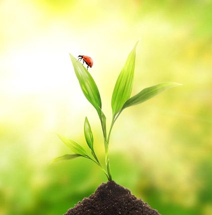 浮動小数点の植物や昆虫材料-2 画像します。