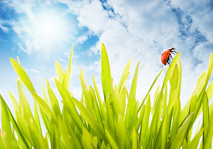 พืชและแมลงลอยภาพวัสดุ-1
