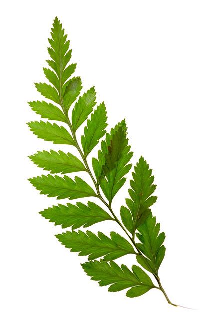 Material de imagen de hojas verdes