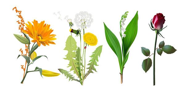 ดอกไม้เวกเตอร์วัสดุสี่ชนิด