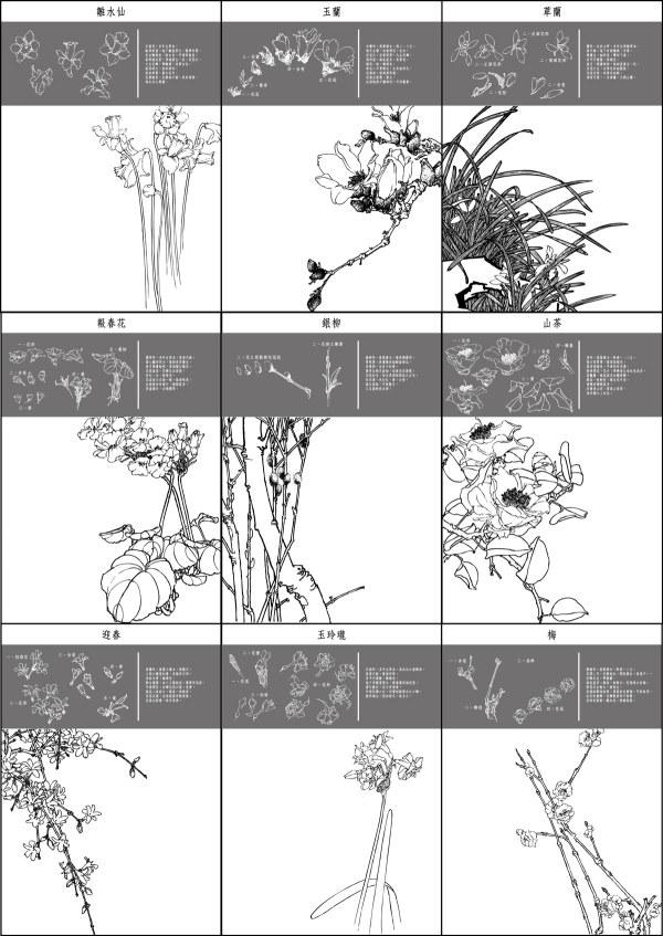 Ciruela, camelia, cymbidium, narcisos de niño, magnolia, albaricoque