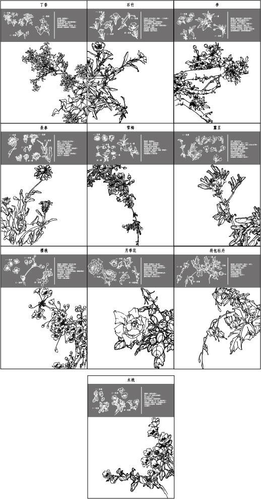 Деревянные персик, Dicentra spectabilis, китайский вырос