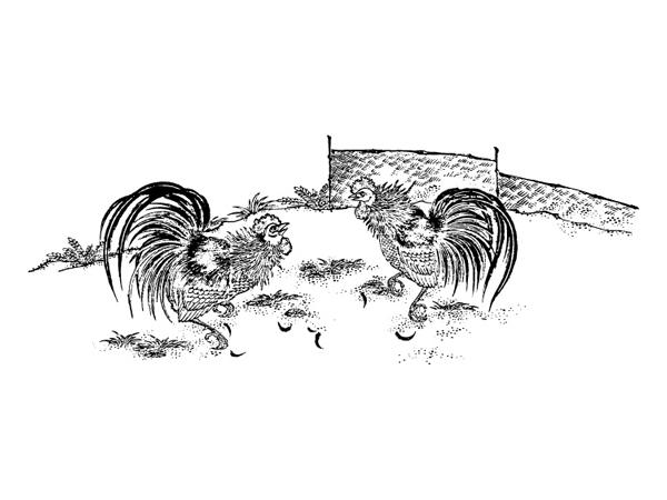 Вектор материальной gamecock