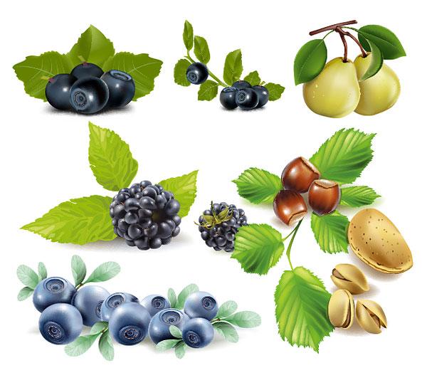 果実、ブルーベリー、梨、ピスタチオ、栗ベクトル