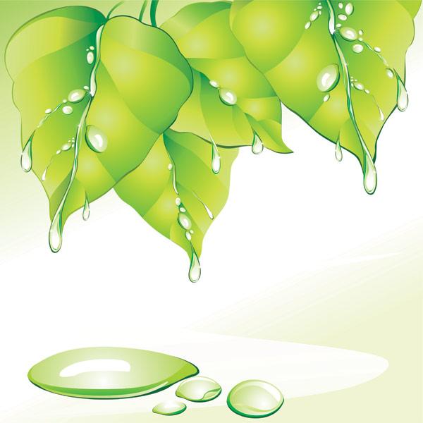 Folha verde água