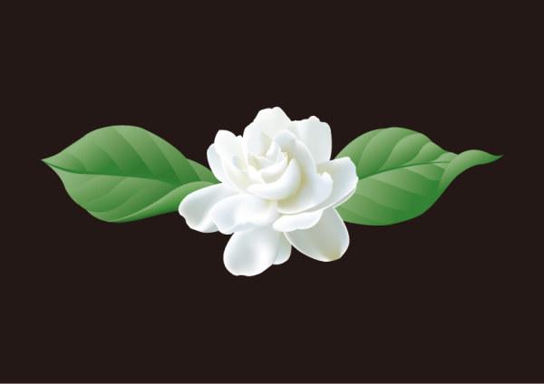 ดอกมะลิเวกเตอร์