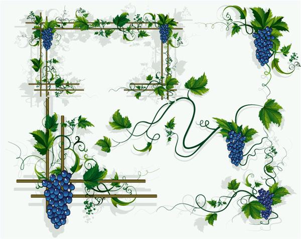 Виноград, виноградные лозы винограда листьев границы векторных материал