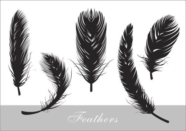 現実的な羽毛のシルエットのベクター