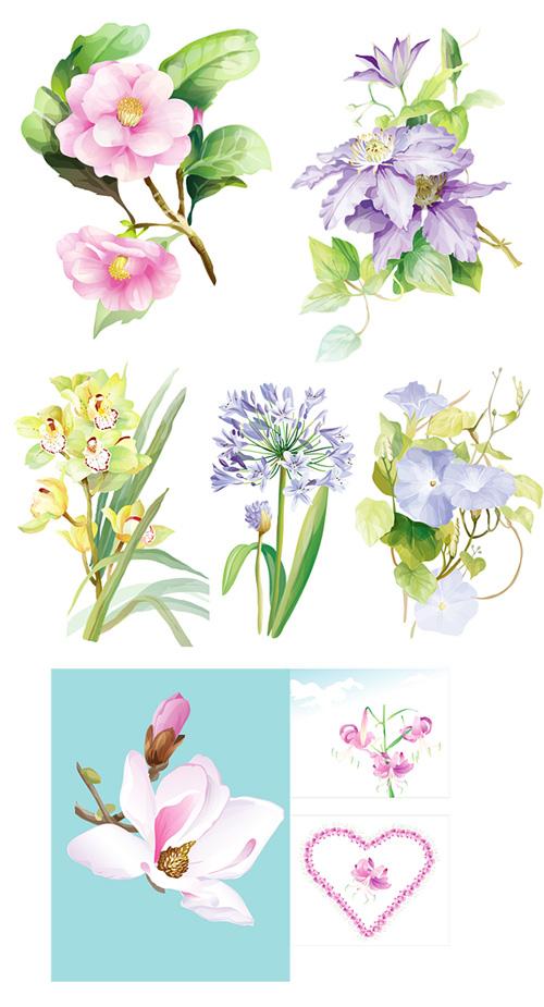 7 flores acuarela elegante vector material
