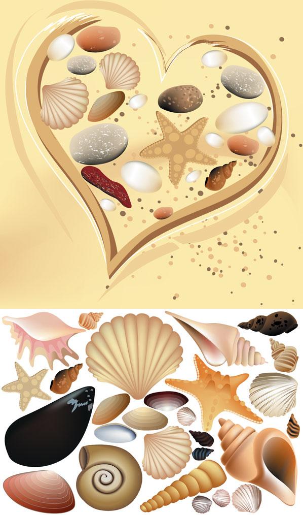 Vector colorido Shell