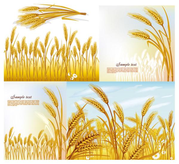 Material de vector de trigo