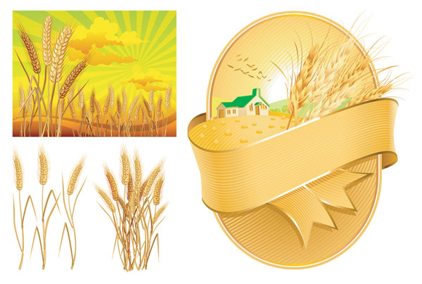 Vector de tema de trigo de material