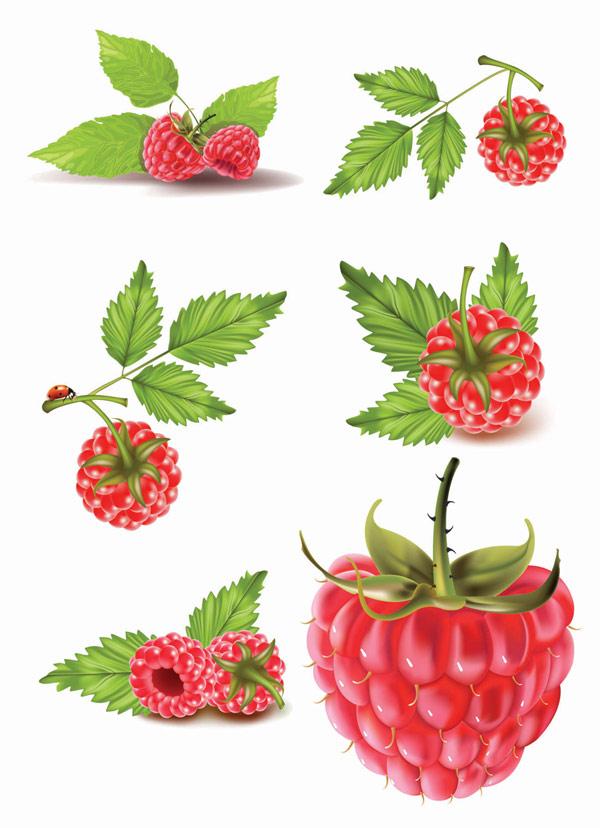 빨간 열매 벡터 자료
