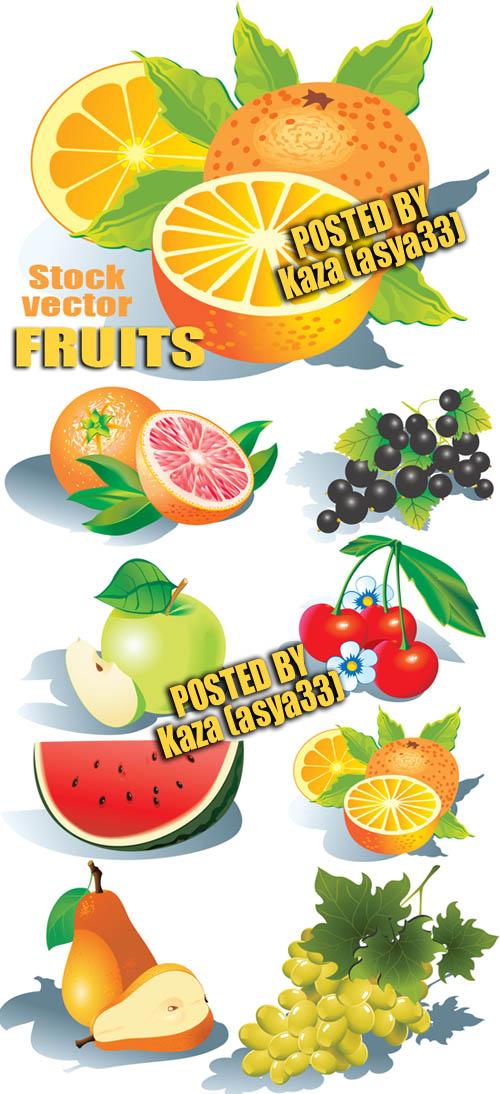 Buah-buahan vektor