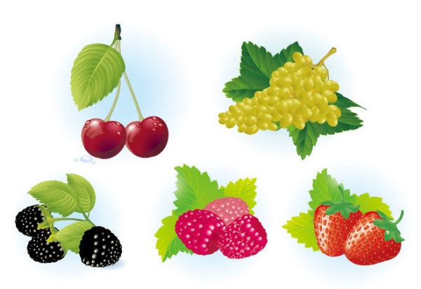Вектор фрукты