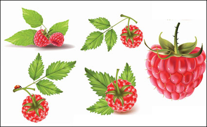 素材の赤い果実をベクトルします。