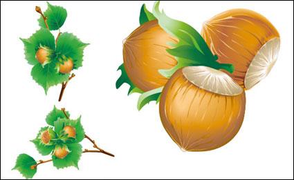 เวกเตอร์ 5 chestnuts