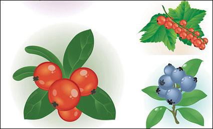 เวกเตอร์ของ berries สีแดงขนาดเล็ก
