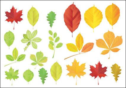 葉のベクトル