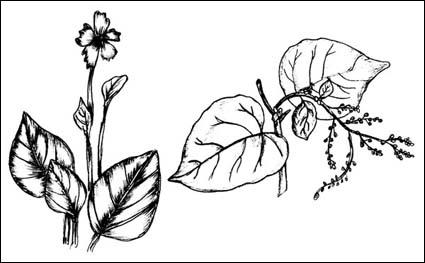 Matériel végétal de vecteur brosse