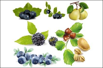 Fruits, bleuets, poires, pistaches, vecteur de châtaignes