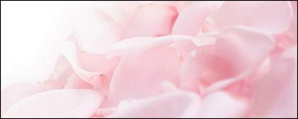 柔らかいピンクのバラの花びら