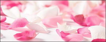 ホワイト ローズの花びらのピンクのバラの画像