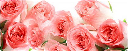 Un bouquet de matériel photo de roses Rose