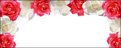 Material do Red Rose White Rose-imagem