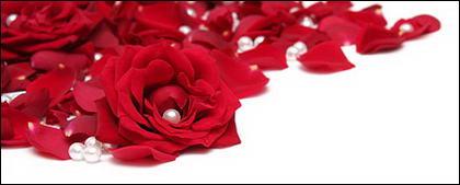 Жемчужина красные лепестки роз