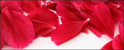 Rendas de pétalas de rosas vermelhas