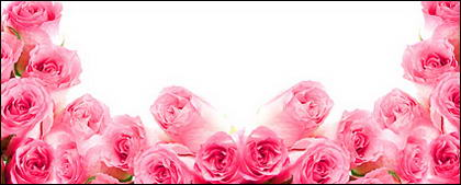 Розовые розы изображение