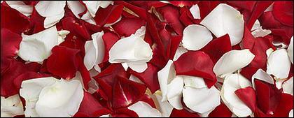 赤いバラと白バラの花びら