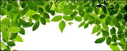 Material de imagen de hojas