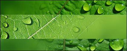 水の葉の画像素材
