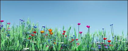 Flores coloridas e imagem de trigo